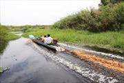 Cà Mau mở đập xả nước cứu rừng U Minh Hạ