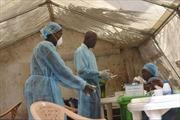 Nguy cơ lây nhiễm Ebola từ động vật