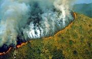 Gia tăng tình trạng phá rừng Amazon