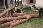 Đắk Lắk: 4 xe công nông 'chế' chở 10m3 gỗ lậu