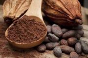Flavanols trong cacao cải thiện suy giảm trí nhớ