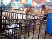 Công khai cơ sở bơm nước vào thịt gia súc