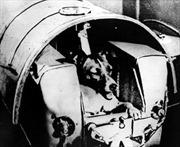 Chú chó Laika - sinh vật sống đầu tiên bay vào vũ trụ