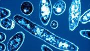 WHO cảnh báo dịch bệnh 'Lê dương' bùng phát tại Bồ Đào Nha