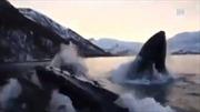 Đàn cá voi lưng gù 'dọa nạt' ngư dân