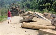 Thu giữ 40 khối gỗ lậu gần biên giới