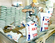 Thị trường thức ăn chăn nuôi chưa phát triển lành mạnh