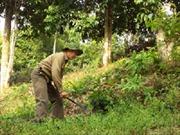 Cựu chiến binh Lộc Văn Nghinh làm kinh tế giỏi
