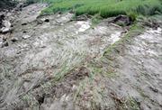 Miền Trung đề phòng lũ quét và sạt lở đất