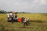 """Tăng tốc tái cơ cấu ngành nông nghiệp ĐBSCLTháo """"nút thắt"""" về vốn"""