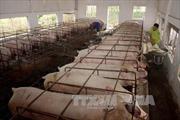 Thực phẩm từ chăn nuôi sẵn sàng đón Tết Ất Mùi