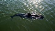 GhostSwimmer - cá 'gián điệp' của Hải quân Mỹ