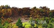 Cháy lớn tại rừng Sóc Sơn, Hà Nội
