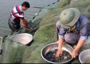 Nuôi cá nước ngọt ở Đắk Nông