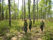 Sống lại rừng xanh nhờ chính sách môi trường rừng
