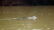 Một xác chết bị thả trôi sông trong bao tải