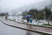 Mưa tuyết và rét đậm không gây hại nhiều đến nông nghiệp