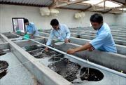 Tìm hướng cho sản xuất tôm giống