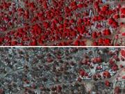 Những hình ảnh về sự tàn bạo của Boko Haram
