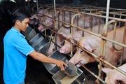 Đảm bảo nguồn cung thực phẩm cho Tết Nguyên Đán