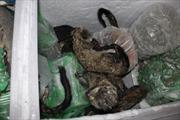 Kiểm soát chặt cơ sở gây nuôi động vật hoang dã
