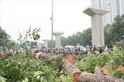 Hà Nội cải tạo cây xanh trước mùa mưa bão
