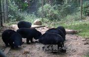 Tràn lan kinh doanh động vật hoang dã