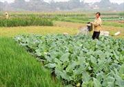 Tái cơ cấu ngành nông nghiệp - Mô hình hiệu quả ở ĐBSCL