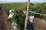 Thanh niên Italy ươm mầm hy vọng tại nông trại