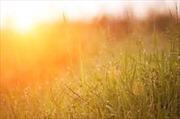 Hiệu ứng phơn gây nắng nóng ở nhiều khu vực
