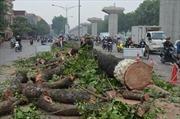 Hà Nội nhận nóng vội chặt cây