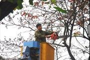 Hà Nội dừng chặt hạ  cây xanh: Một quyết định hợp lòng dân