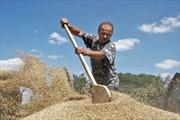 Nguyên nhân và tác động khiến xuất khẩu Ukraine sụt giảm