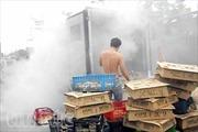 Xe tải phát hỏa, gần 200 con gà con bị thiêu cháy