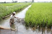 Ứng phó biến đổi khí hậu ở đồng bằng sông Cửu Long