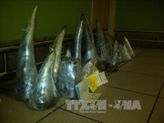 Bắt giữ sừng tê giác, ngà voi tại sân bay Nội Bài