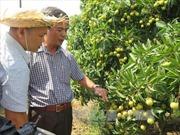 Việt Nam xuất khẩu lô vải thiều đầu tiên sang Mỹ ngày 30/5