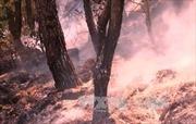 Vẫn chưa khống chế được cháy rừng tại Thanh Hóa