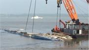 Bắt đầu lật ngược tàu chìm trên sông Dương Tử