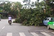 Hà Nội có hơn 1.000 cây xanh bị gãy đổ
