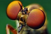 Thụy Sĩ nghiên cứu chế tạo mắt ruồi nhân tạo