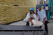 Gỡ nút thắt cho ngành lúa gạo