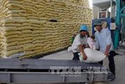 Xác minh việc xin giấy phép xuất khẩu gạo phải 'lót tay' 20.000 USD