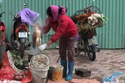 Dịch cúm gia cầm vẫn nóng, người Hà Nội thờ ơ