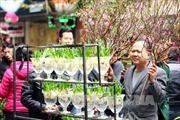 Rạng rỡ chợ hoa Tết phố Hàng Lược