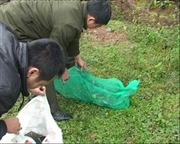 Hà Giang thả 3 động vật quý hiếm về rừng