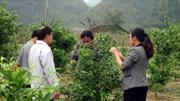 Phát huy sức dân để xây dựng nông thôn mới
