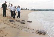 Thả rùa biển về tự nhiên