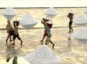 Các mẫu muối ở Hà Tĩnh đều đảm bảo an toàn
