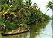 Bóng dừa quê hương